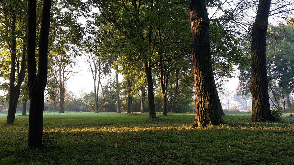 inwentaryzacja drzew i krzewów