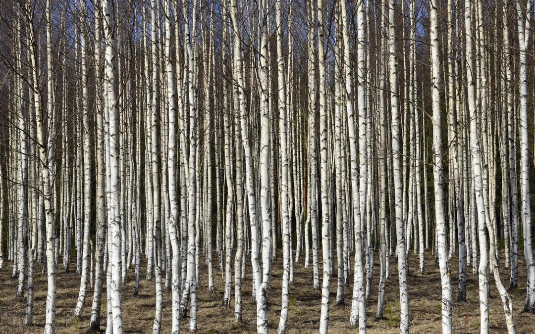Drzewa nie wymagające zezwolenia na wycinkę