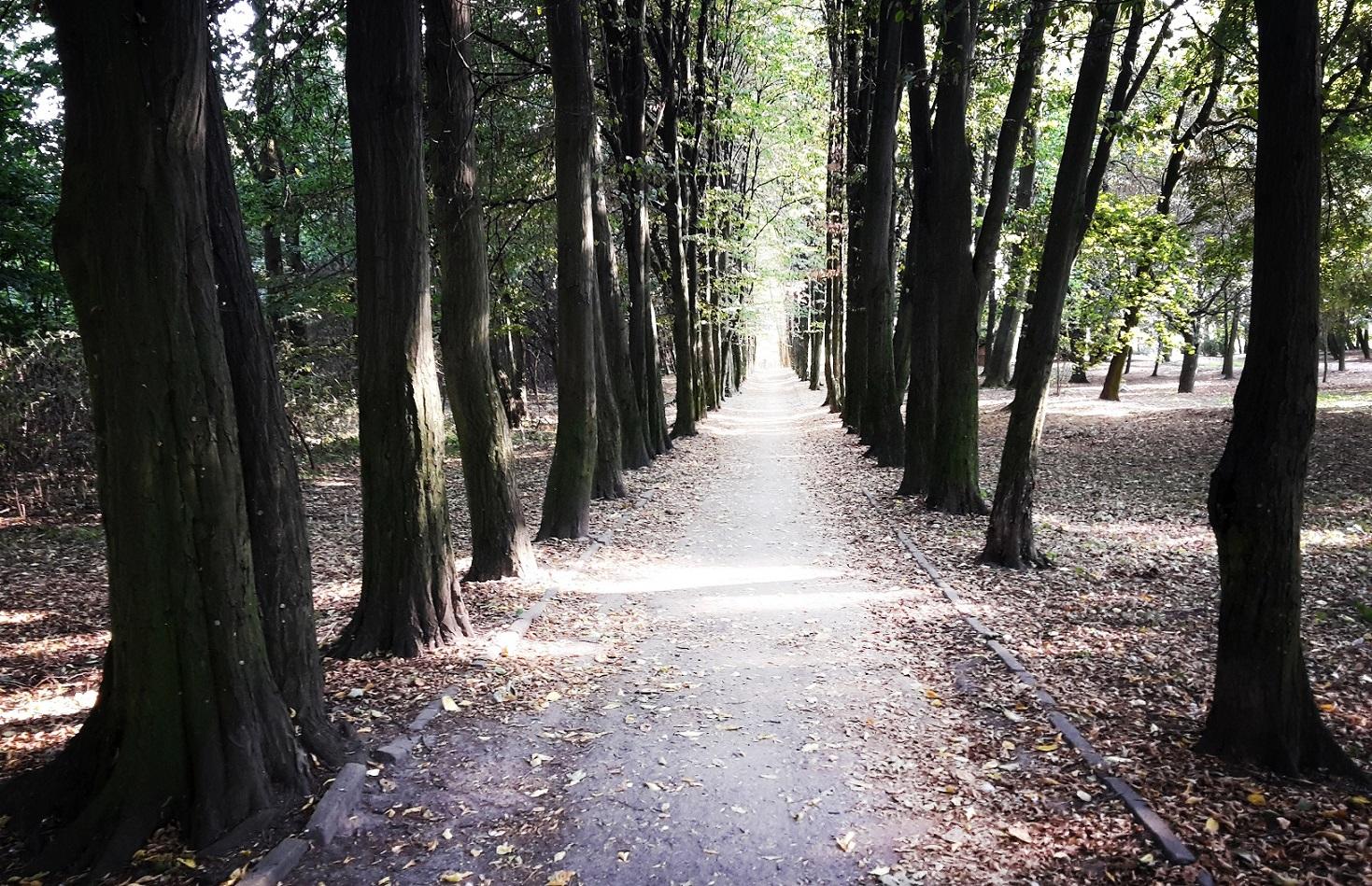 Aleja grabowa - rewaloryzacja Parku Belzackiego w Potrkowie Trybunalskim
