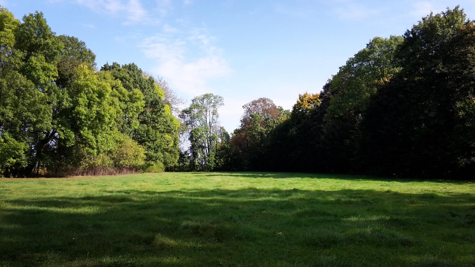 polana parkowa