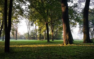 Inwentaryzacja dendrologiczna – park w Bronowie