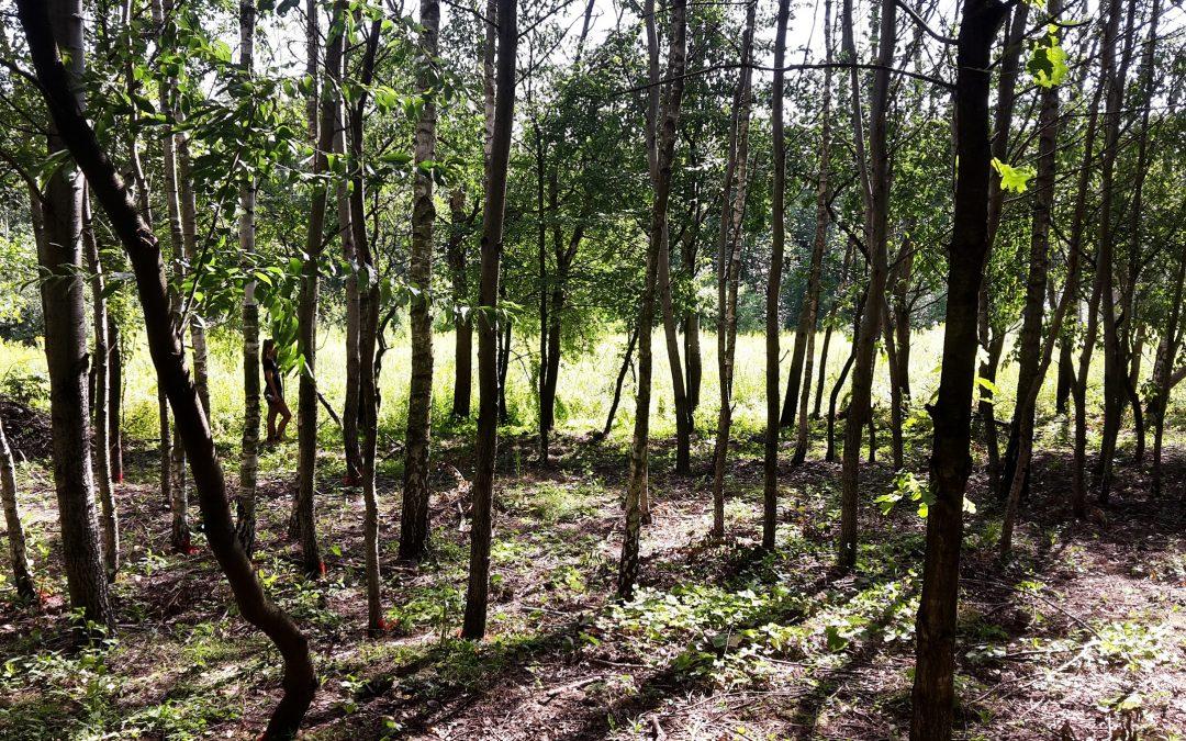 Opłaty za usunięcie drzew – nowe niższe stawki
