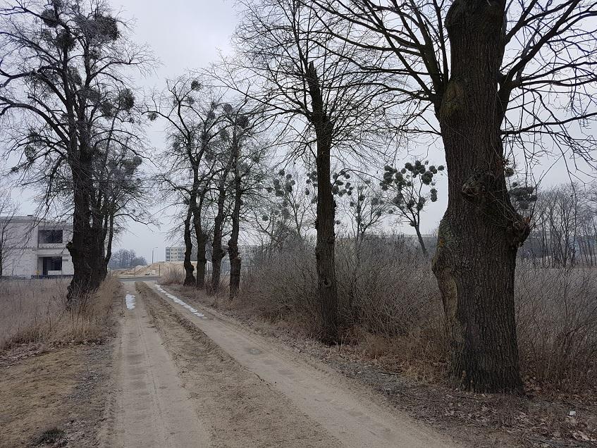 Inwentaryzacja drzew w Solcu Kujawskim