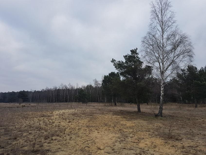inwentaryzacja drzew